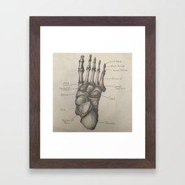 Bones of the Foot Framed Art Print