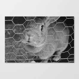 The Fluffiest Rabbit Canvas Print