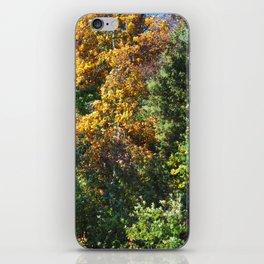 Fall Foliage 002 iPhone Skin
