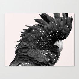 Black Billie Canvas Print