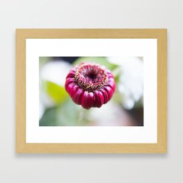 Unknown Flower Framed Art Print