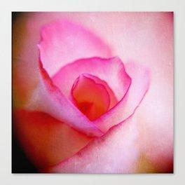 Pink Rose 2 Canvas Print