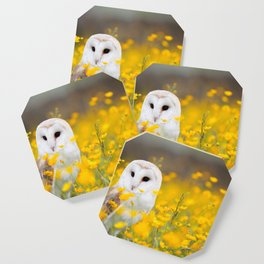 Little Owlet in Flowers (Color) Coaster