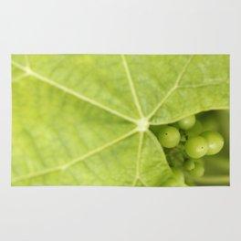Maturing wine grapes Rug