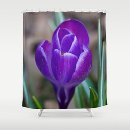 Crocus Pocus Shower Curtain
