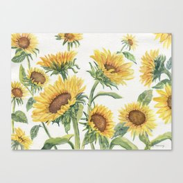 Blooming Sunflowers Canvas Print