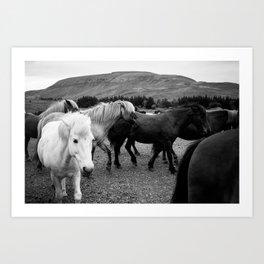 Herd of Horses Art Print