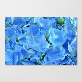 Elegant Blue Hydrangea Canvas Print