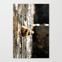 Translucence of a Wing Canvas Print