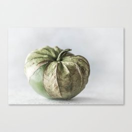 Tomatillo Canvas Print