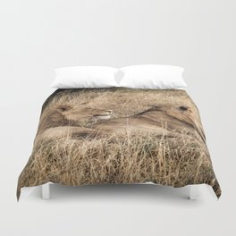 Camouflaged African Male Lions of the Kalahari Desert Duvet Cover