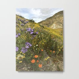 Wildflowers in California Metal Print