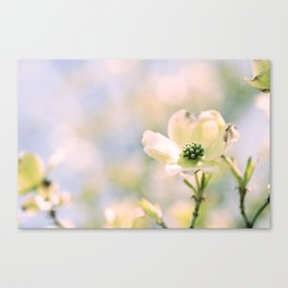 Spring Dogwood Canvas Print