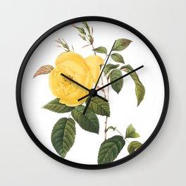 Botanical Print, Yellow Roses, Rosa Sulfurea Wall Clock