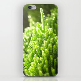 sunshine pond pine iPhone Skin