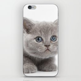 sweet cat iPhone Skin
