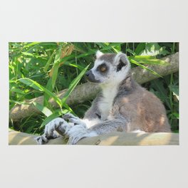 Cute and relaxed Ring-tailed lemur (lemur catta) Rug