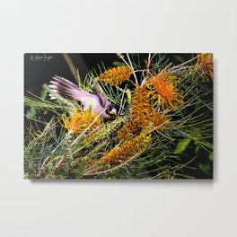 Dropping In For Lunch Metal Print