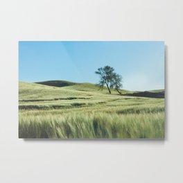 Lone Tree Photography Print Metal Print