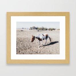 Mr. Horse Framed Art Print