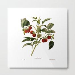 Framboises Metal Print