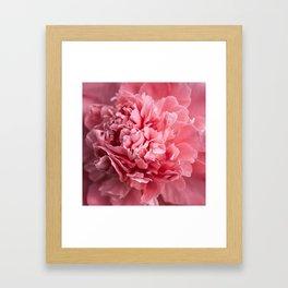 Peony Photography | Hot Pink Flower | Floral Art Print | Nature | Botany | Plant Framed Art Print
