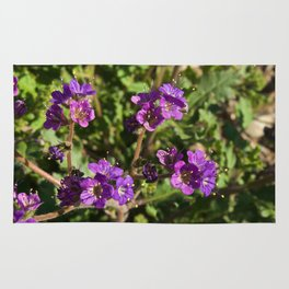 Notch-Leaved Phacelia - Desert Wildflower Rug