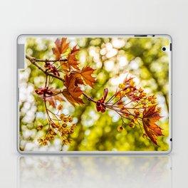 Maple blooms Laptop & iPad Skin
