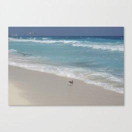 Carribean sea 8 Canvas Print