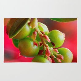 Green Berries Red Background #society6 #decor #buyart Rug