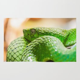 Coiled green snake Rug