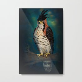 The ornate hawk-eagle is a bird of prey. Metal Print