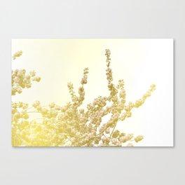 Sunlit Cherry Blossoms - Dreamy Floral Photography - Flower Art Prints, Apparel, Accessories... Canvas Print