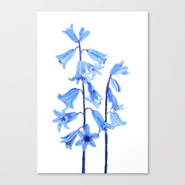 botanical bluebell flowers watercolor Canvas Print