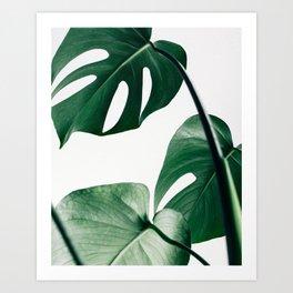 Plant, Green, Monstera, Leaf, Minimal, Trendy decor, Interior, Wall art, Photo Art Print