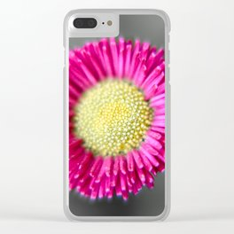 Blossom from a Daisy Isolated on Gray Background Clear iPhone Case