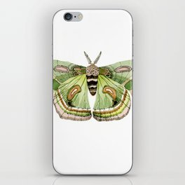 Green Cecropia Moth iPhone Skin