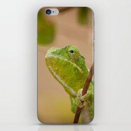 Green Chameleon iPhone Skin