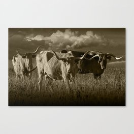 Sepia Tone of Texas Longhorn Steers under a Cloudy Sky Canvas Print