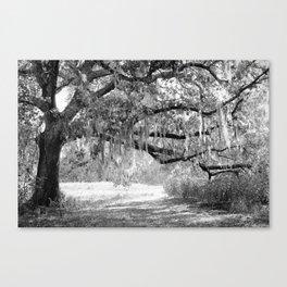 New Orleans Oak Tree Canvas Print