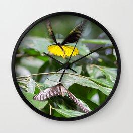 Butterflies at Sepilok Wall Clock