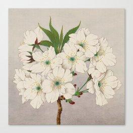 Cascade Fragrance Cherry Blossoms Canvas Print