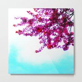 Takoma Sakura Metal Print