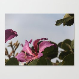 Photograph of flower and bee Canvas Print
