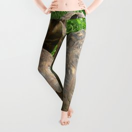 Bullied into Submission - Mating Tortoises Leggings