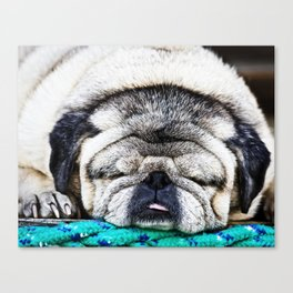 Tuckered Out Pug Canvas Print
