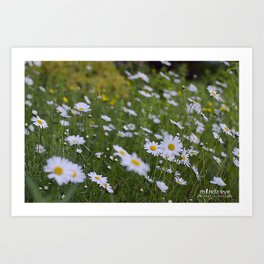 A Bed of Daisies Art Print