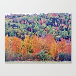 Paint By Nature - Fall Foliage Canvas Print