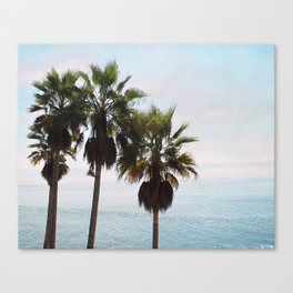 Laguna Palms Canvas Print