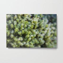 Winter Moss Metal Print